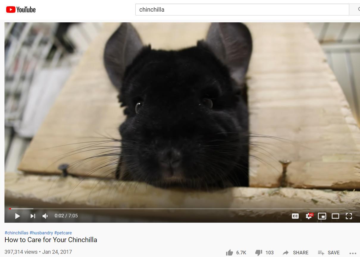 chinchilla niche
