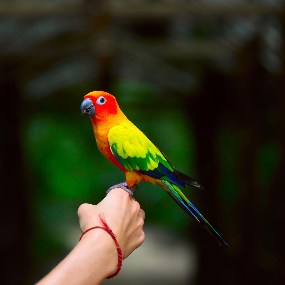parrot care niche